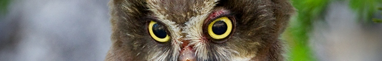 Har du hittat en skadad fågel och behöver råd om vad du ska  göra med den så kan du kontakta polisen på den ort där du hittat fågeln.  Polisen har listor över ortens kontaktpersoner.  I Trollhättan är det Bernt Björk som svarar på fågelfrågor.  Honom når du på 0520-42 51 11 eller 0735-78 71 09.  Vissa fåglar kallas Statens vilt och de får inte behållas av  upphittaren om de påträffas i naturen.